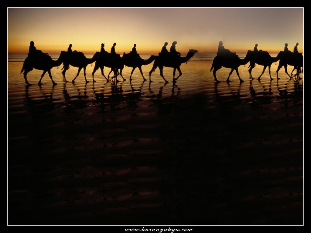 wallpaper_camel_desert